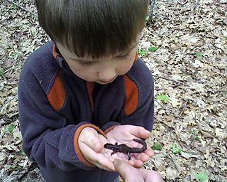 Ivo salamander1