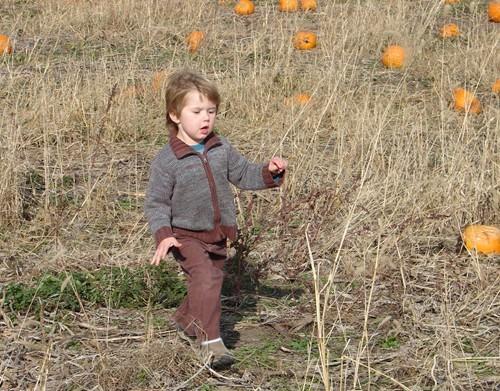 Pumpkinpatch_2