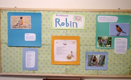 Robin_pictures